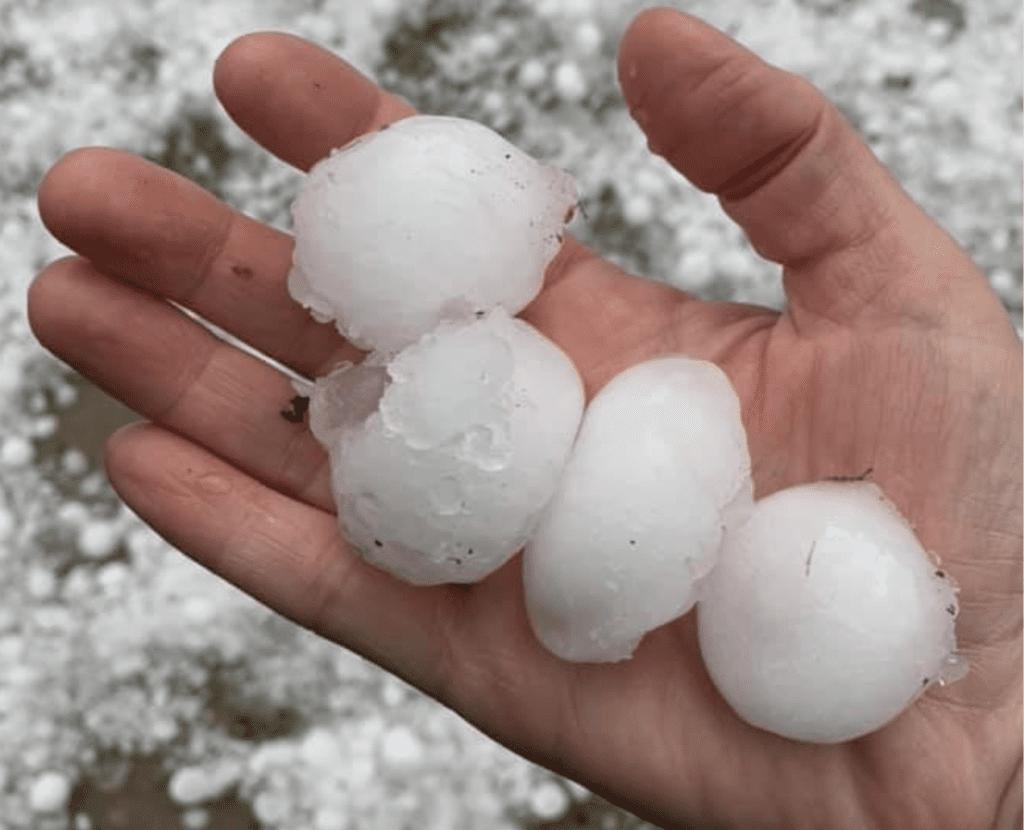 Hail stones from the Calgary storm.